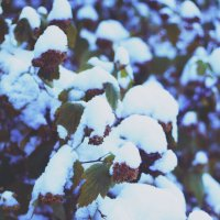 первый снег :: Tasha