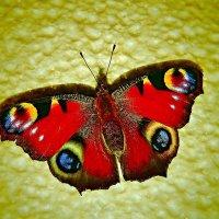 Бабочка :: Валентина Пирогова
