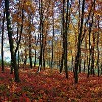осенний лес :: юрий иванов