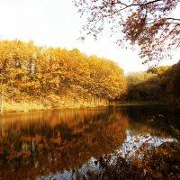 Золотой лес :: Татьяна Латкина