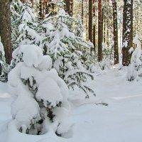Снежной белою зимою :: Юрий Кузмицкас