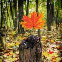 Восхитительная осень! :: Allekos Rostov-on-Don
