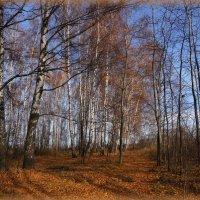 Последние солнечные деньки осени :: marmorozov Морозова