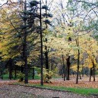 В городе осень... :: Тамара (st.tamara)