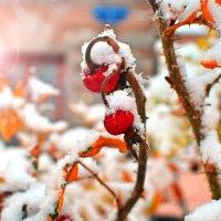 Первый снег :: Семен Кактус