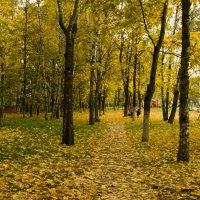 осень :: Маргарет мм