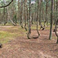 Танцующий лес :: Ирина Шарапова