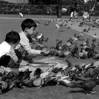 рисовые росыпи от китайских мальчиков :: Тамара Бердыева