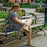 Белка городская цивилизованная :: Ольга Маркова