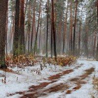 Лежит недолго первый снег... :: Лесо-Вед (Баранов)