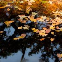 Листья на воде и под водой 2 :: Ilona An