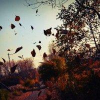 Осень :: Кристина Лисица