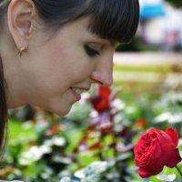 Хризантема и роза :: Александр Люликов