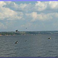 Птицы над водой! :: Любовь Чунарёва