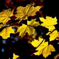 Осенние лоскутки..... :: Надежда Млат