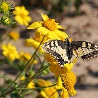 Бабочка :: Victor Levitan