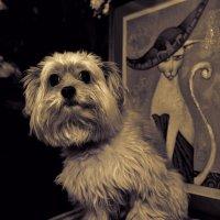 Собачий портрет на фоне кошачьего :: Цветков Виктор Васильевич