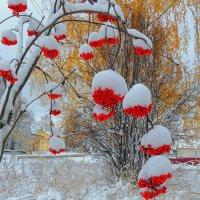 Первый снег накрыл рябиновые кисти :: Павлова Татьяна Павлова
