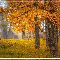 Осень в дубовой роще :: Юрий Глушков