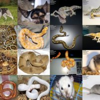 Предлагаю животных для съёмок: :: Аренда Экзотических Животных для съемок