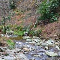 Горная река. :: zoja