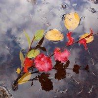 Осенние краски :: Александр Велигура