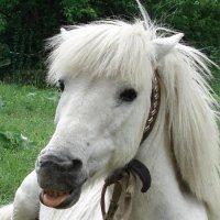 Конь :: Eva ***