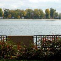 Живая изгородь на набережной... :: Тамара (st.tamara)