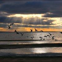 Чайки над морем :: Лариса Шамбраева