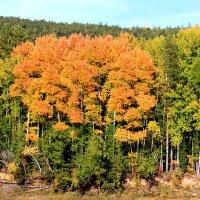 Осень на реке Лена :: Таня Фиалка
