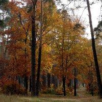 """Осень 2014. Парк """"партизанской славы"""" Фото №3 :: Владимир Бровко"""