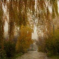 Дождливый денек. :: Галина