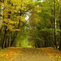 осень :: Михаил Жуковский