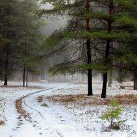 Осенним мартовским туманом... :: Лесо-Вед (Баранов)