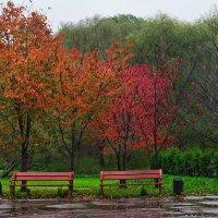 Осень. Дождь. :: Владимир Лисаев