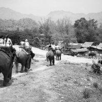 Прогулка на слонах. :: Evgeniy Ignashin