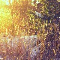 осенне-зимнее солнышко :: Tasha