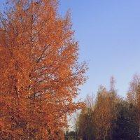 то ли осень...то ли зима...)) :: Tasha