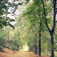 Осень :: Юлия Дягилева