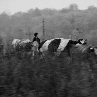 Пастушка.... :: Валерия  Полещикова