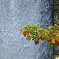 Листы осенние у водопада :: Владимир Гилясев