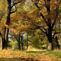Аллея в парке осенью златой. :: Владимир Гилясев