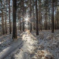 позаметало все стежки и дорожки :: Дамир Белоколенко