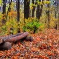 Для отдыха в лесу... :: *MIRA* **