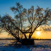 Дерево :: Анатолий Юдин