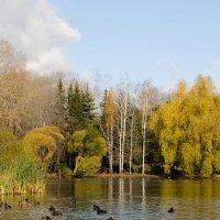 На озере :: Наталья Смагина