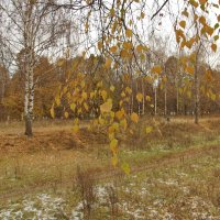 На пороге зимы. :: Ирина Нафаня