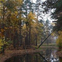 Старый пруд...7 :: Nikanor