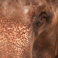 Мудрый слон :: Evgeniy Ignashin