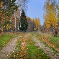 Осенняя дорога 2 :: Игорь Ратников